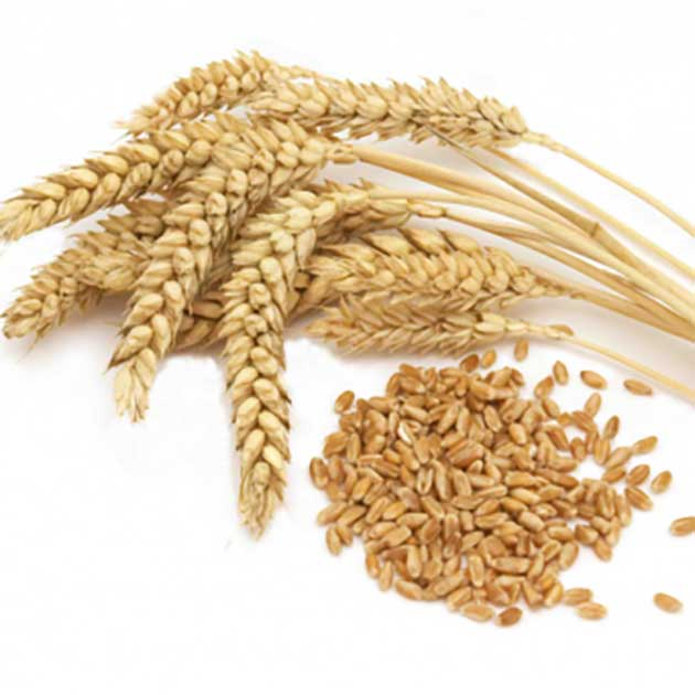 durum_wheat